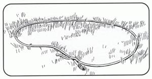 kerti tó helyének kijelölése